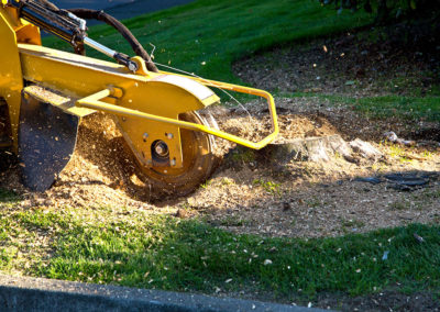 Land Clearing: stump grinding
