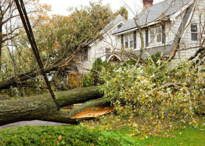 Tree Services: removing fallen trees