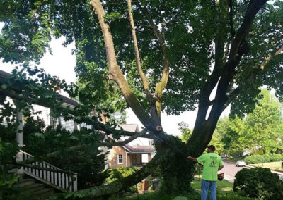Tree Services: trimming limbs